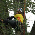 Johan Pihl (SE), letztjähriger Gewinner & diesmal auf dem 4. Platz, hoch oben im Baum