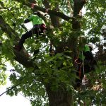 Deutsche Baumklettermeisterschaft 2014: Work Climb