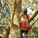 Ein Baumpfleger klettert einen Baum hoch.