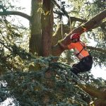 Ein Mann klettert mit Händen und Füßen einen Baum nach oben