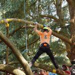 Baumpfleger klettert über einen Ast