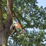 ETCC 2018: Work Climb