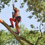 Ein Mann klettert einen Ast nach oben