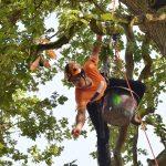 Ein an einem Seil hängender Mann wirft ein Stöckchen aus dem Baum