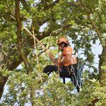 Ein Mann mit Helm und Kletterausrüstung klettert durch einen Baum