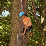 Eine Frau seilt sich an einem Baumstamm ab