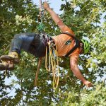 Baumpfleger geift schwebend an einem Seil nach einem Ast