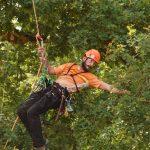 Baumpfleger an einem Kletterseil streckt sich nach einem Ast