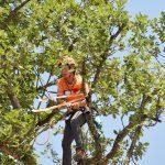 Baumpflegerin klettert durch Äste