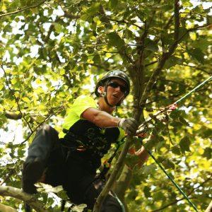 Baumkletterin in der Krone eines Baumes