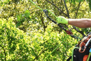 Details der Kletterausrüstung eines Baumkletterers