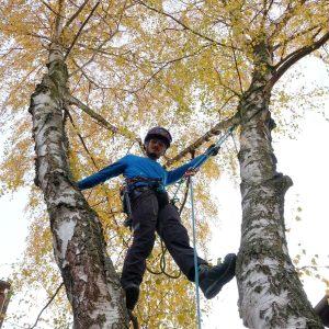 Baumkletterer zwischen zwei Birken