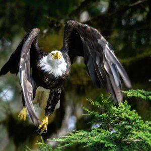 Adler fliegt los