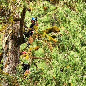 Baumkletter auf dem Weg nach oben
