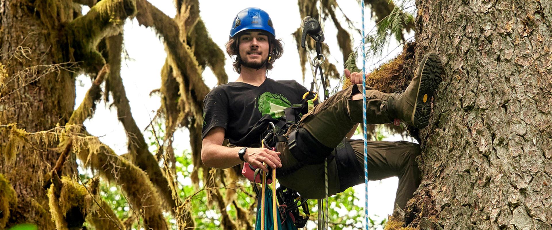 Kletterer im Baum