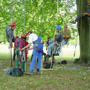Verschiedene Baumkletter am Stammfuß eines Baumes