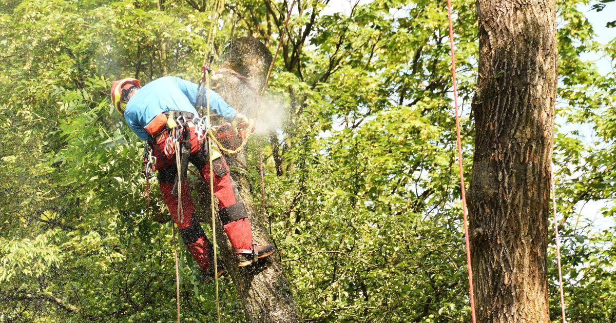 Baumpflege Klettergurt : Freeworker blog »schnittschutzhosen für die baumpflege