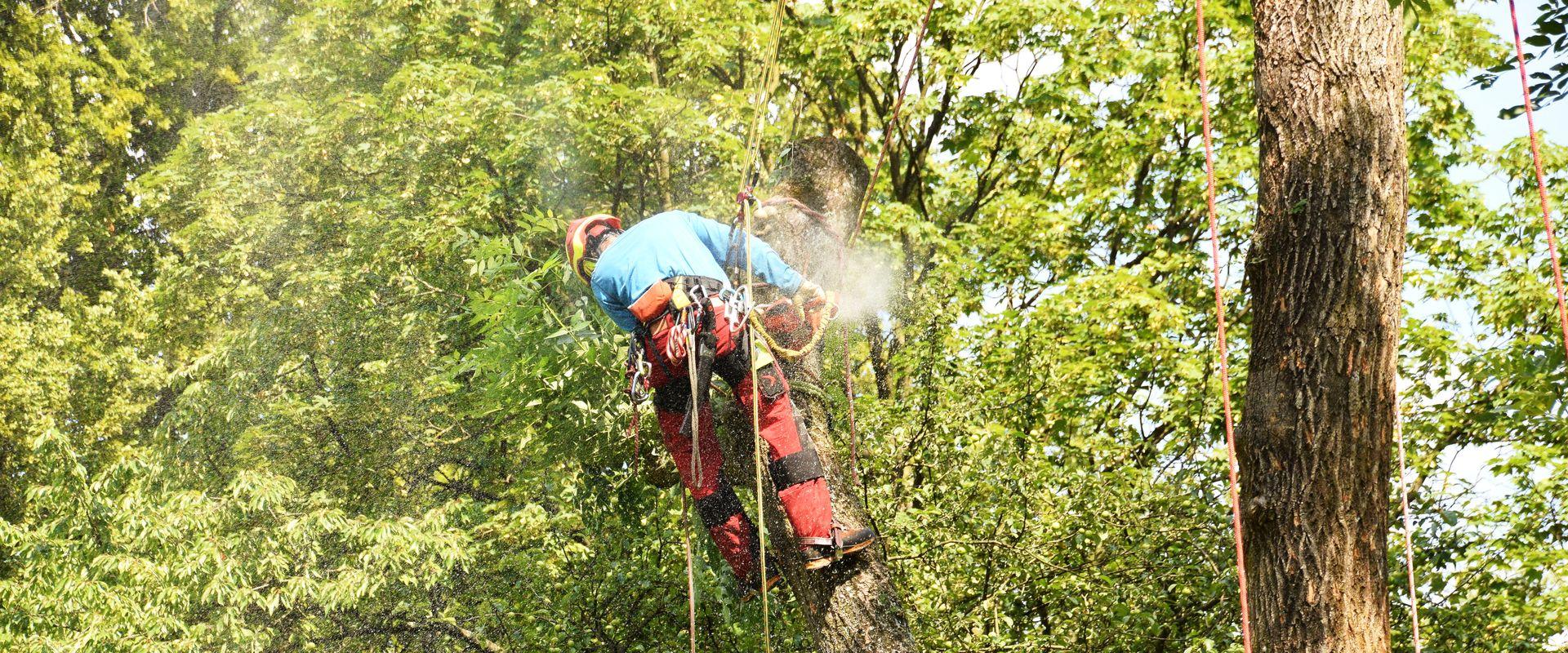 Baumkletterer sägt einen Ast ab