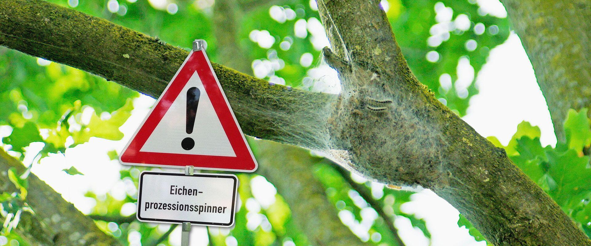 Permalink zu:Welche Schutzausrüstung um den Eichenprozessionsspinner zu beseitigen?