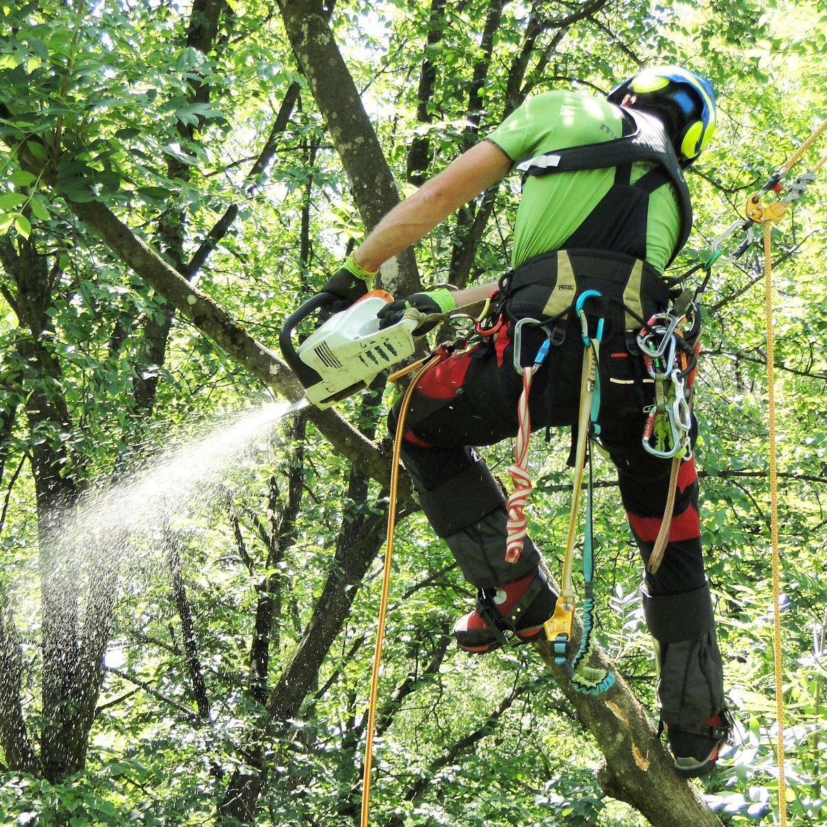 Chainsaw protection shoes in tree care
