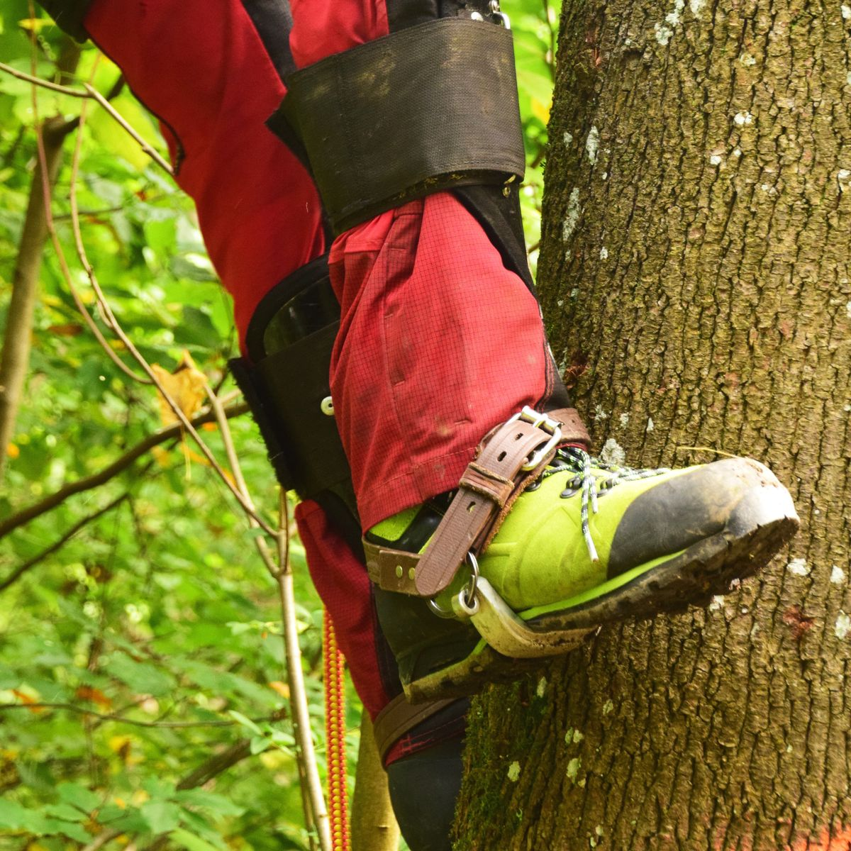 Chainsaw protection shoe in tree care with climbing spurs