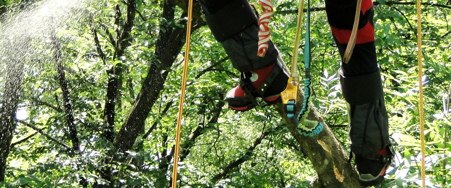 Permalink to: Chainsaw protection shoes in tree care
