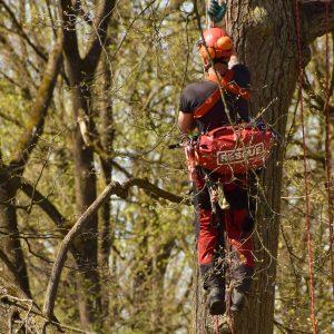 Baumkletterer mit Rescue Banana beim Aufstieg